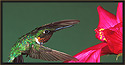 Ruby-throated Hummingbird III